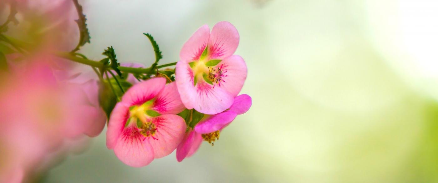 送上鲜花,祝母亲节快乐_图1-1