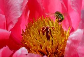 美丽的花蕊 (1)