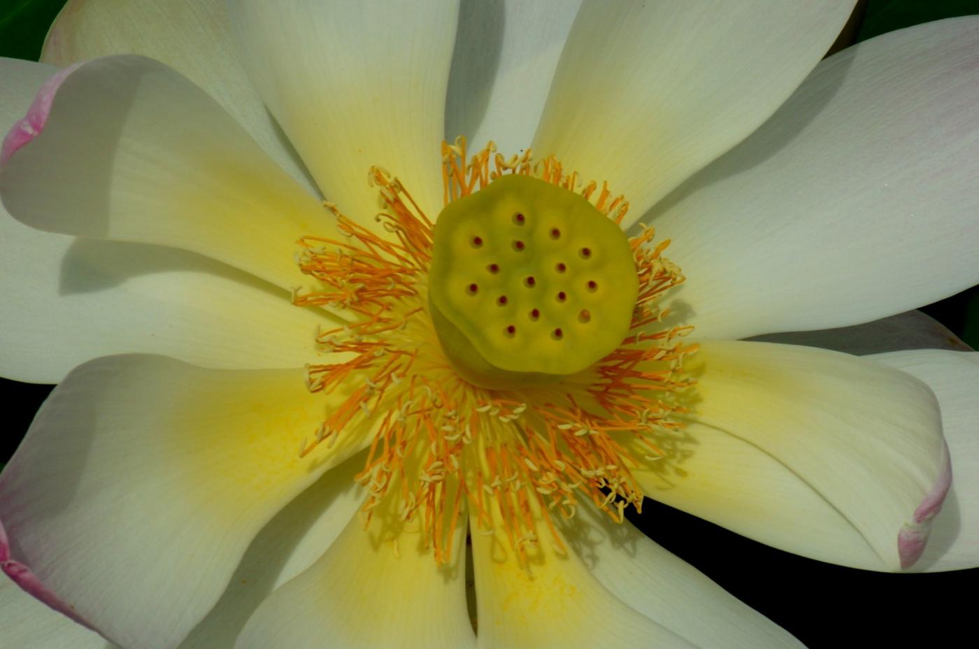 美丽的花蕊 (1)_图1-2