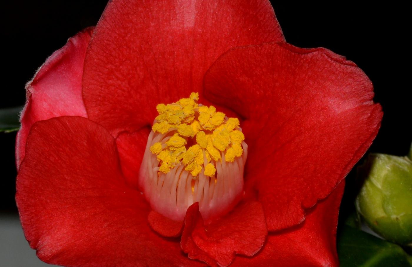 美丽的花蕊 (1)_图1-7