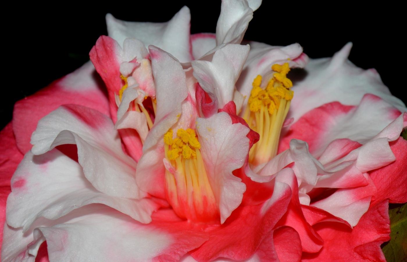 美丽的花蕊 (1)_图1-9