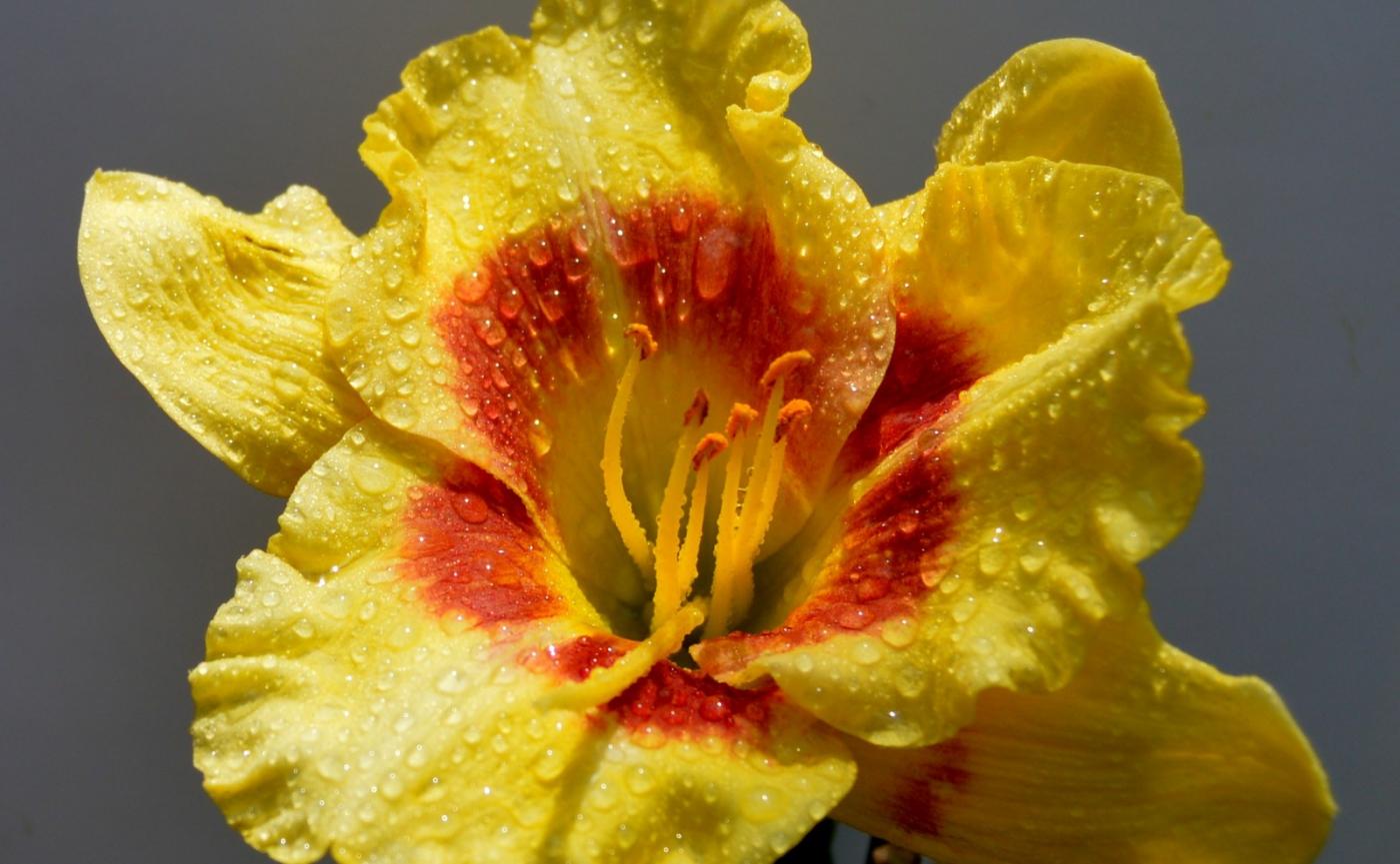 美丽的花蕊 (1)_图1-24