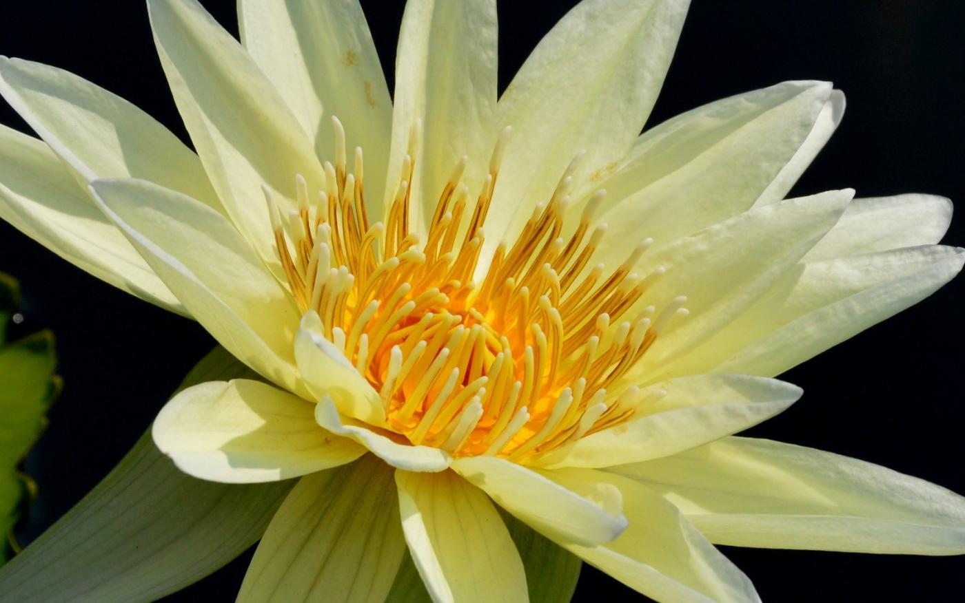 美丽的花蕊 (1)_图1-25