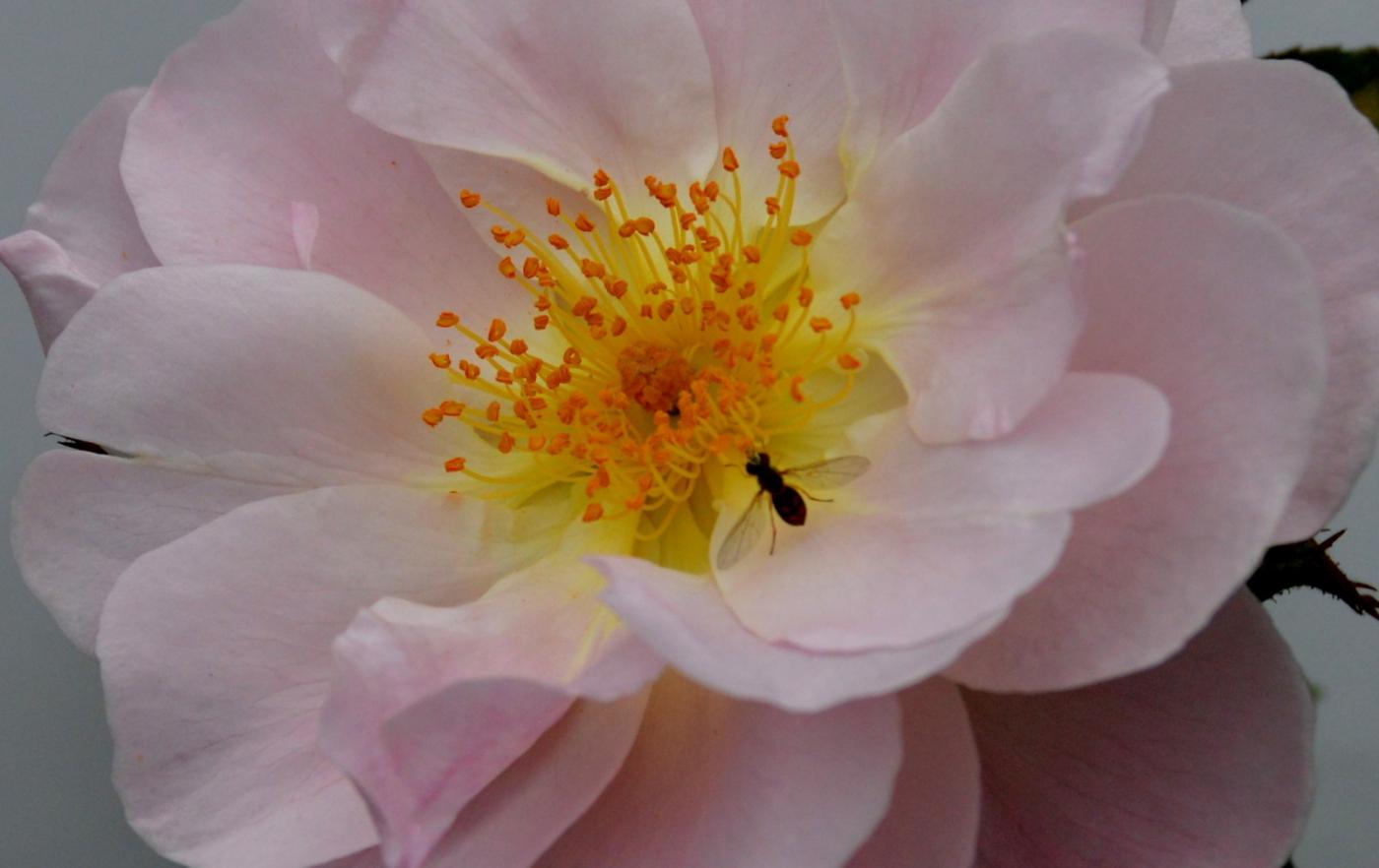 美丽的花蕊 (1)_图1-27
