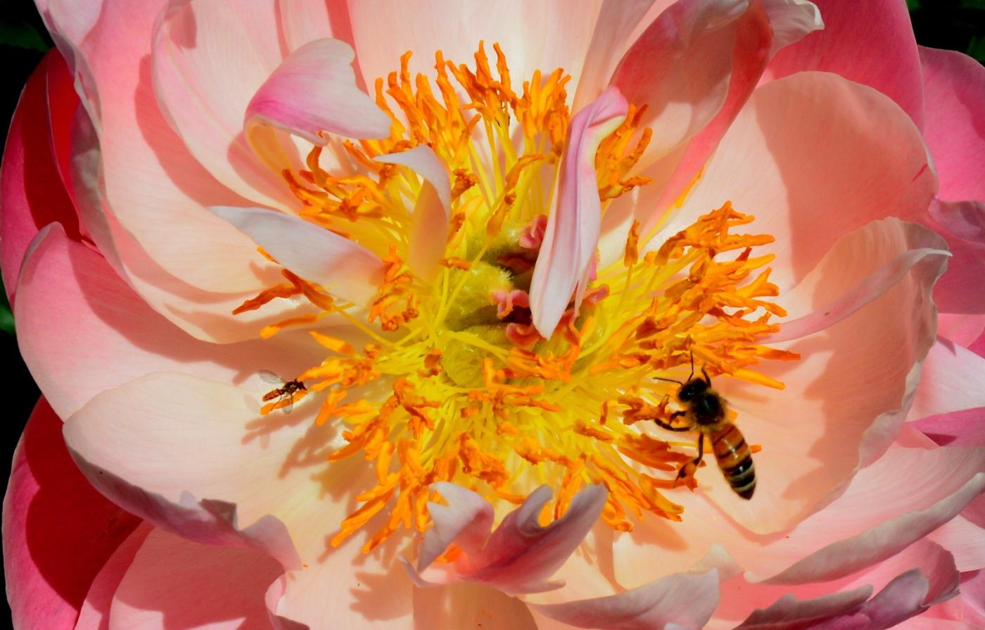 美丽的花蕊 (2)_图1-1