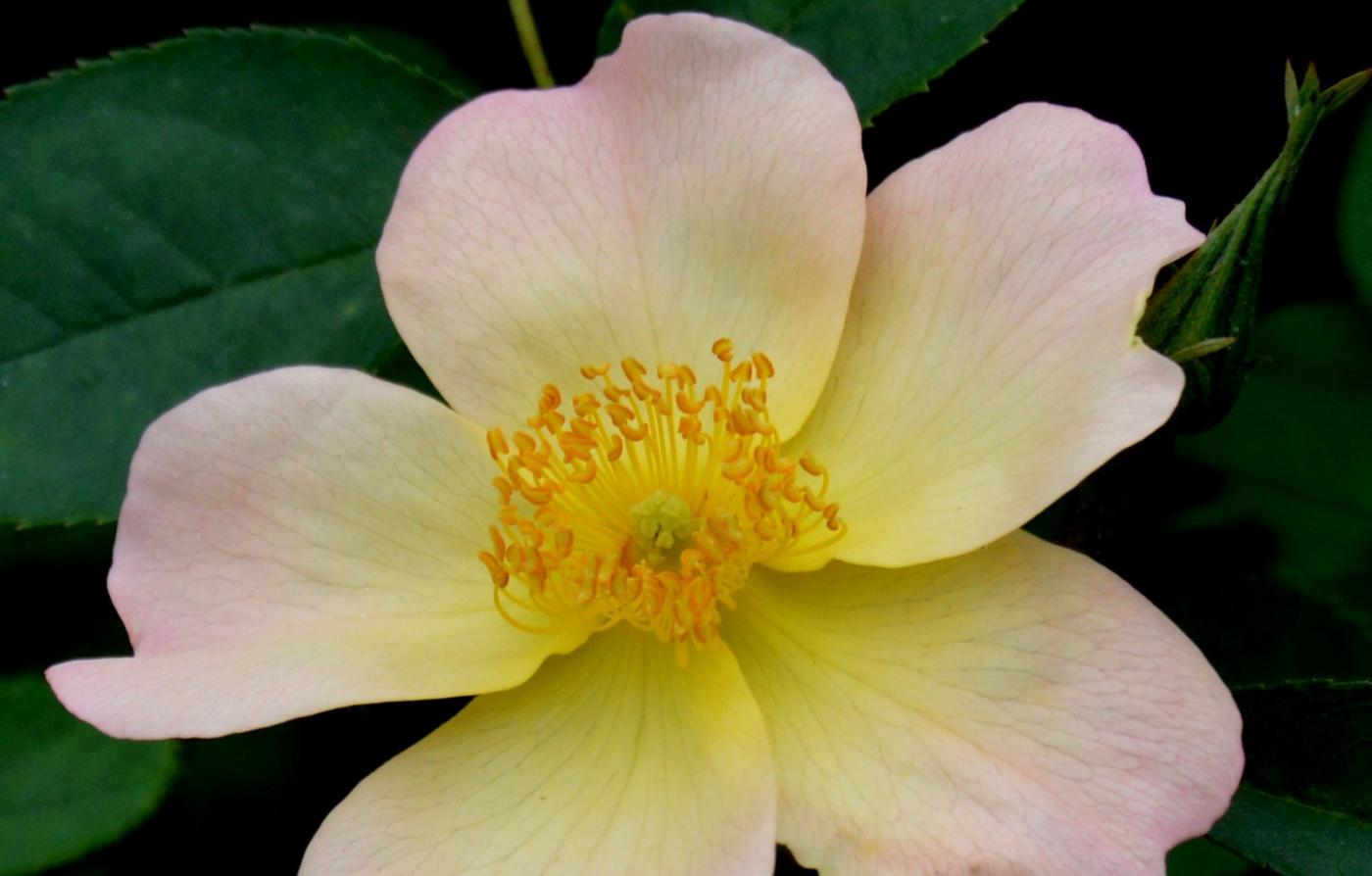 美丽的花蕊 (2)_图1-2