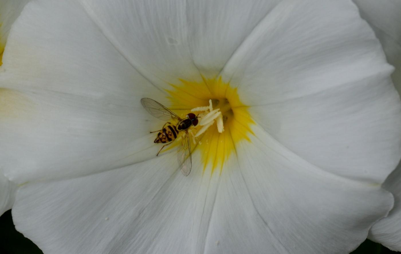 美丽的花蕊 (2)_图1-6