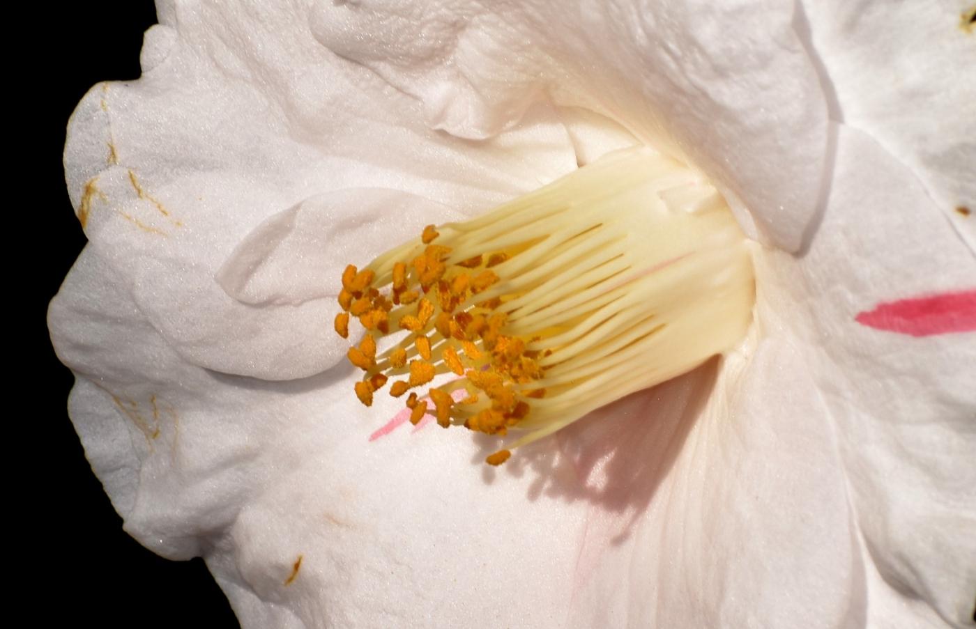 美丽的花蕊 (2)_图1-8