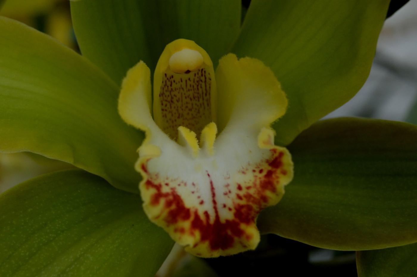 美丽的花蕊 (2)_图1-9
