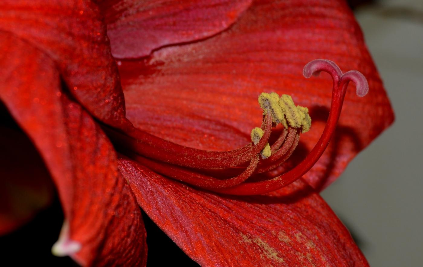 美丽的花蕊 (2)_图1-11