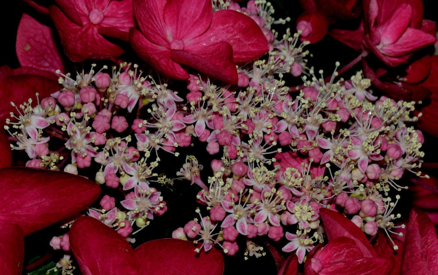 美丽的花蕊 (2)_图1-15