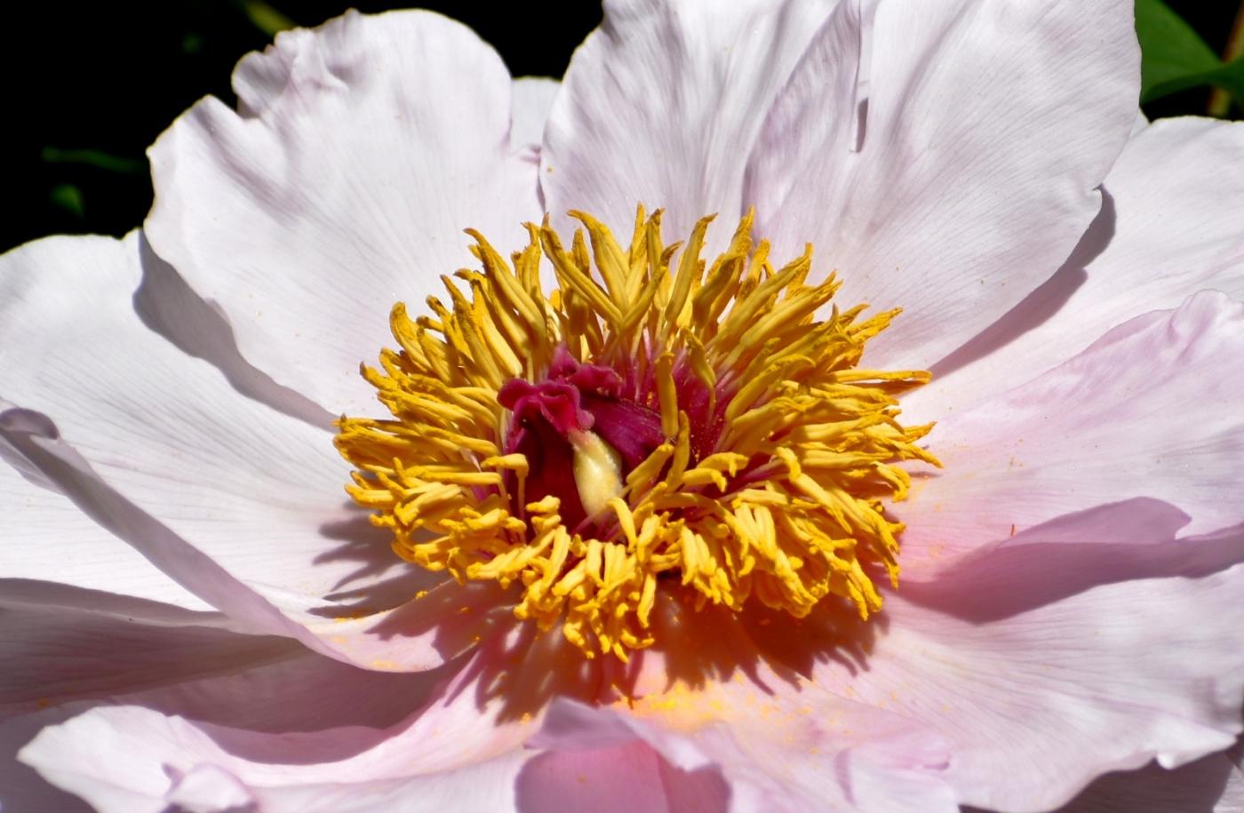 美丽的花蕊 (2)_图1-19