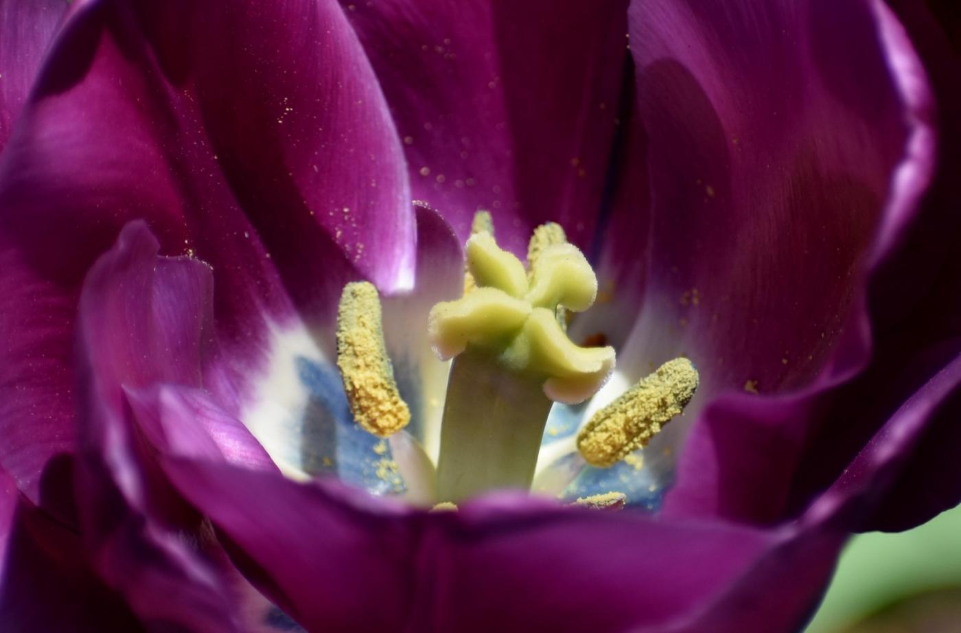 美丽的花蕊 (2)_图1-20
