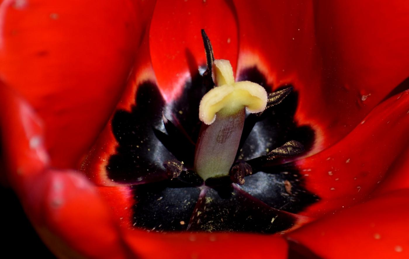 美丽的花蕊 (2)_图1-26