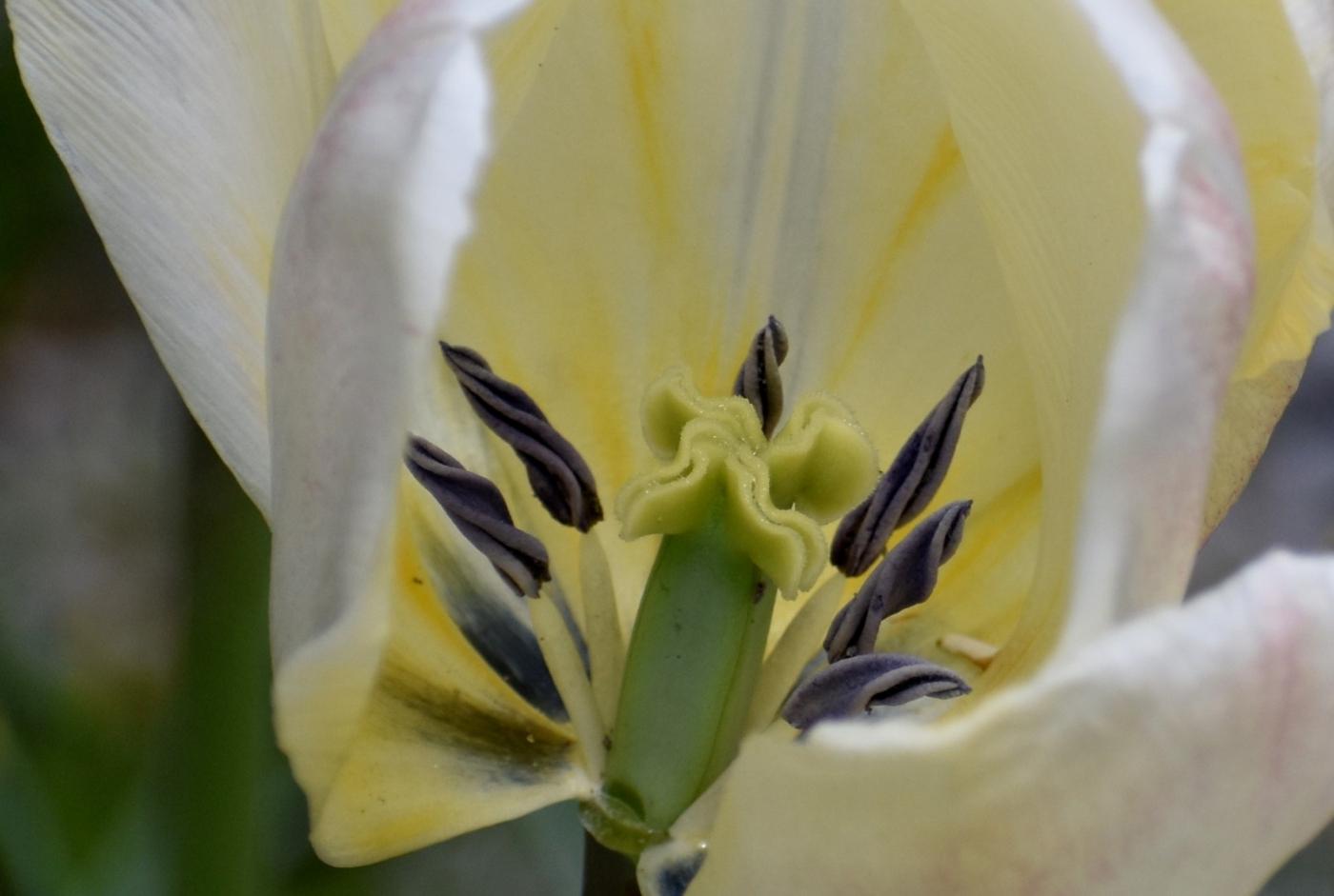 美丽的花蕊 (2)_图1-28
