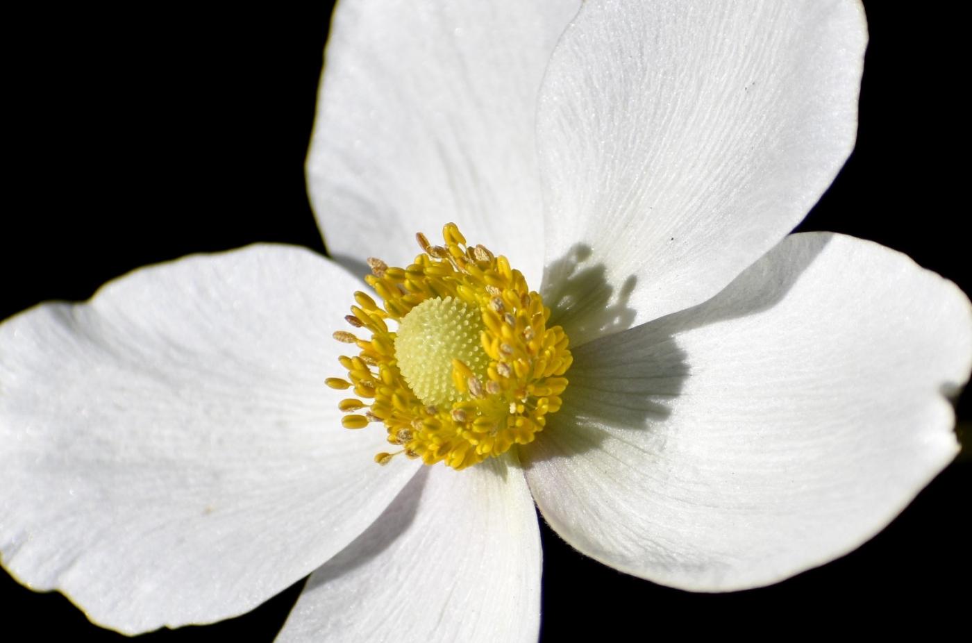 美丽的花蕊 (2)_图1-29