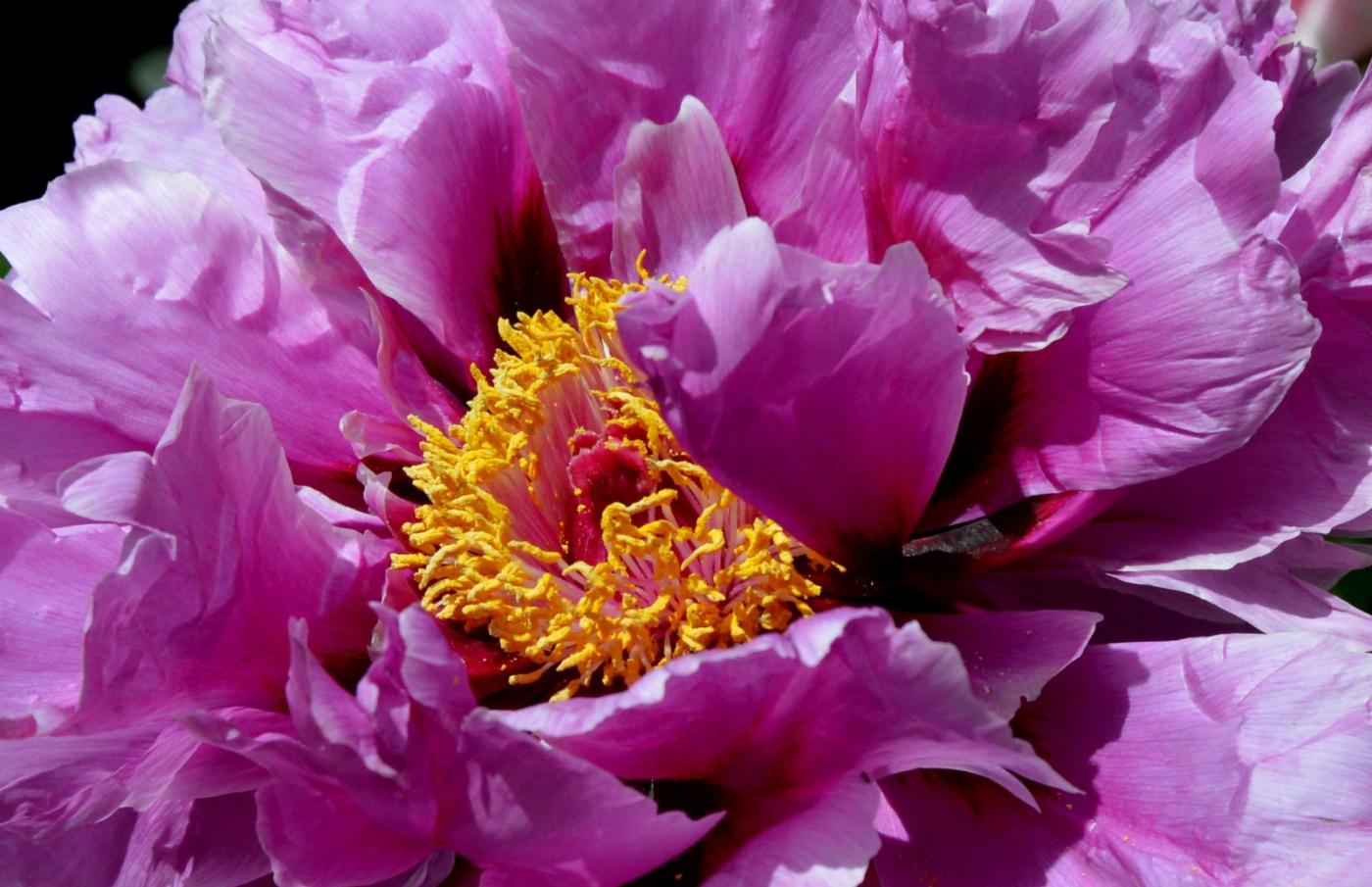 美丽的花蕊 (2)_图1-30