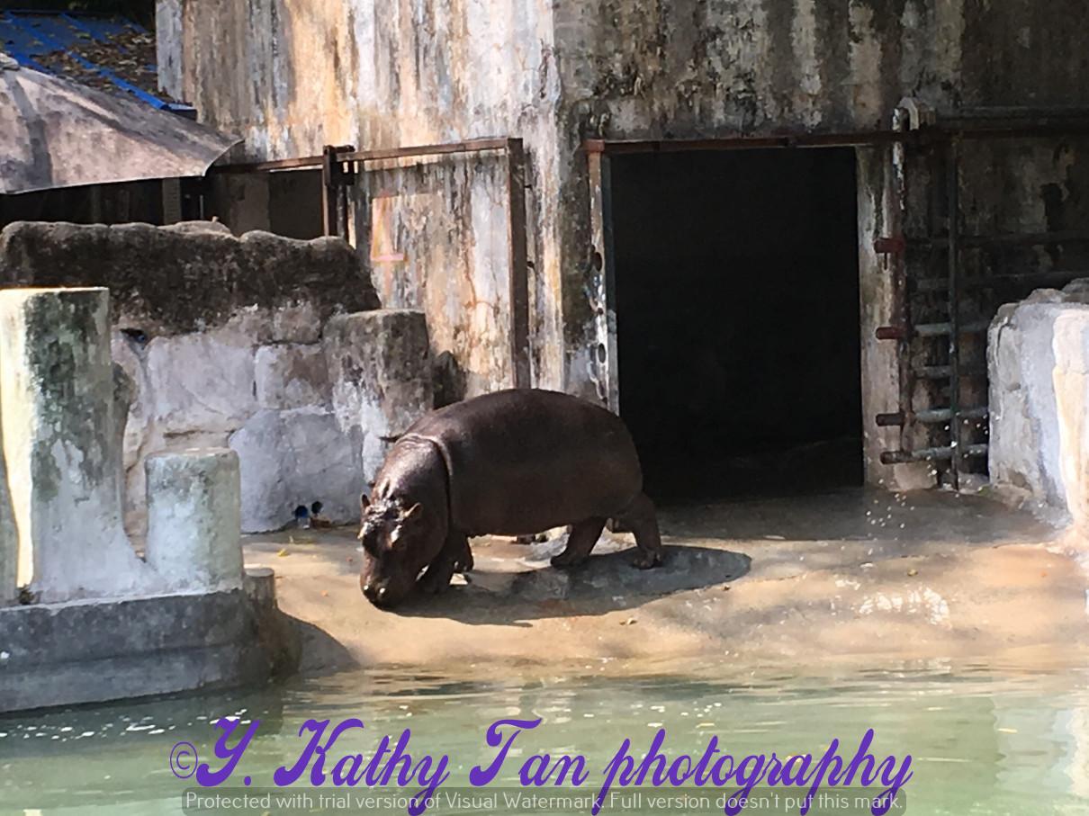 廣州動物園_圖1-7