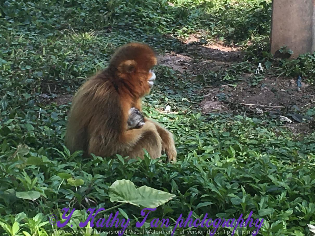 廣州動物園_圖1-9