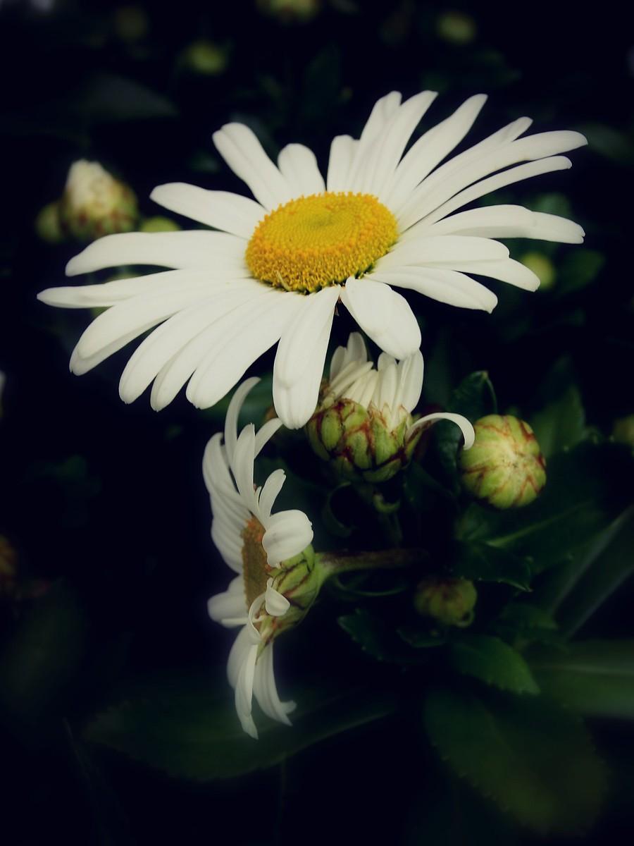 春暖花开_图1-11