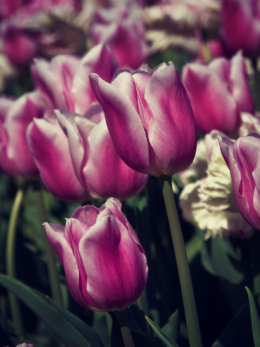 春暖花开_图1-12