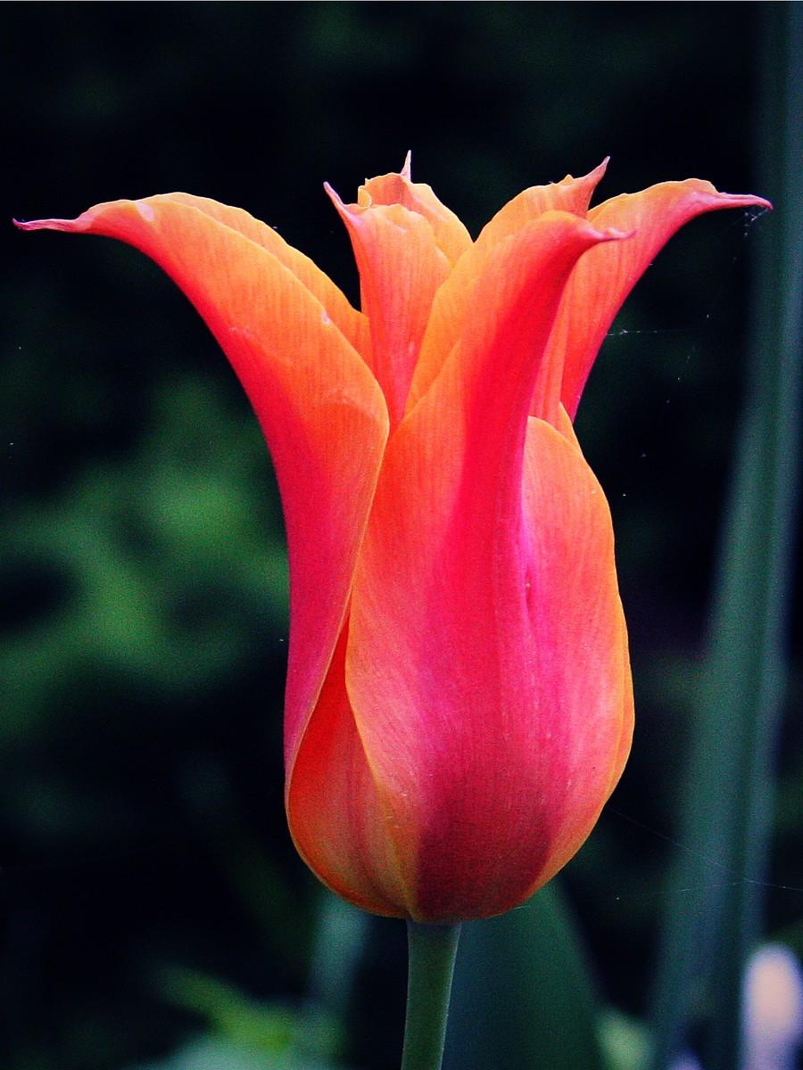 春暖花开_图1-9