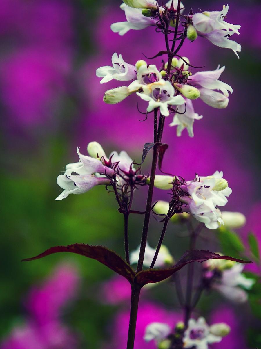 春暖花开_图1-3