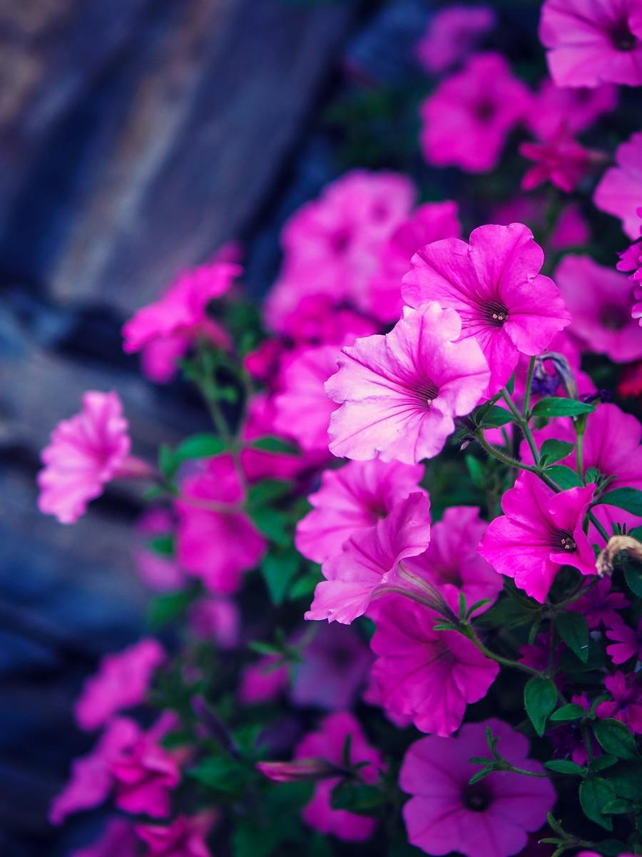 春暖花开_图1-2