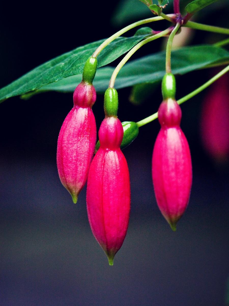 春暖花开_图1-5