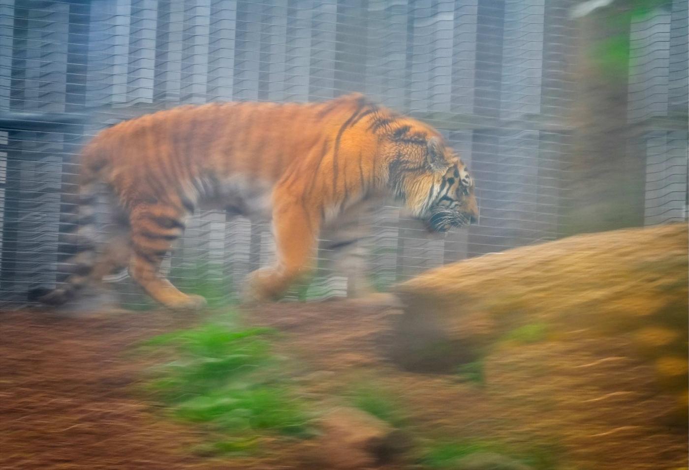 动物园拍虎记【心想事成】_图1-4