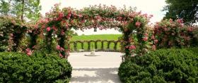 公园漫步,玫瑰花的拱门不多见