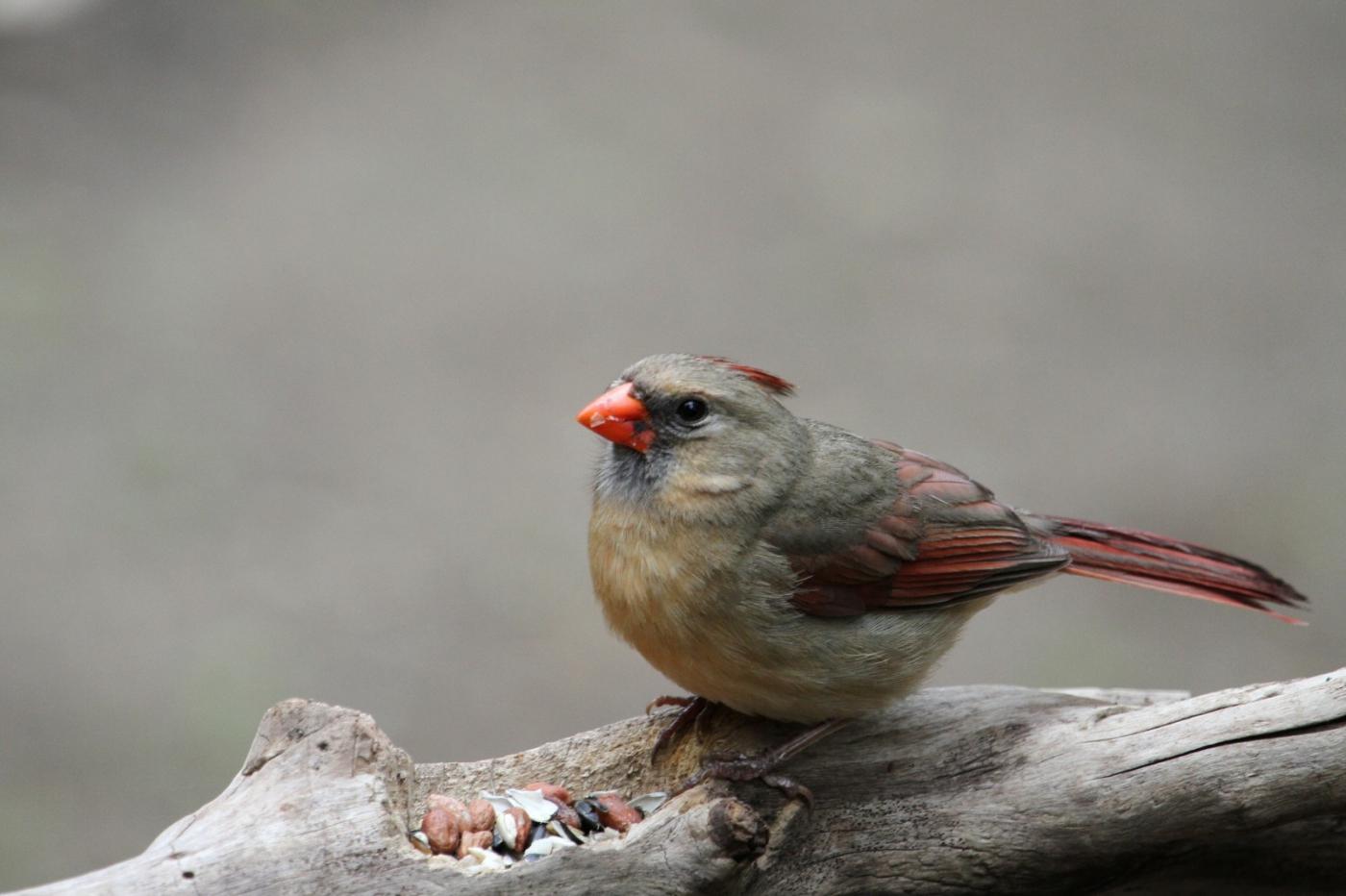 【田螺摄影】有吃的主教鸟还会挑肥拣瘦_图1-3