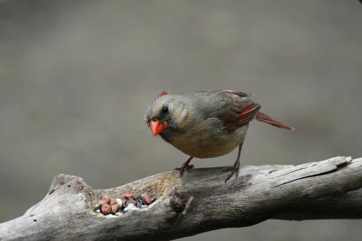 【田螺摄影】有吃的主教鸟还会挑肥拣瘦_图1-2