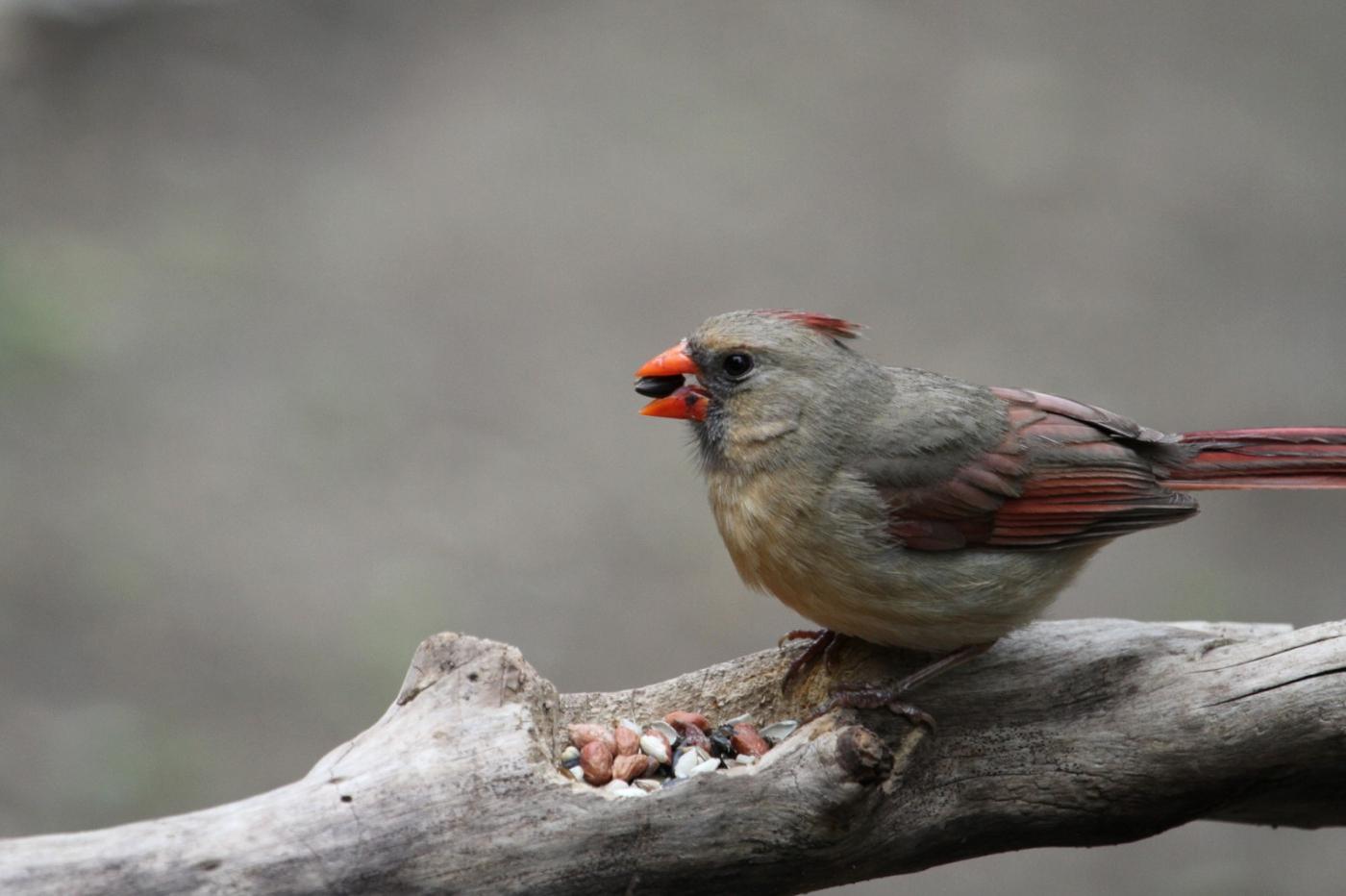 【田螺摄影】有吃的主教鸟还会挑肥拣瘦_图1-1