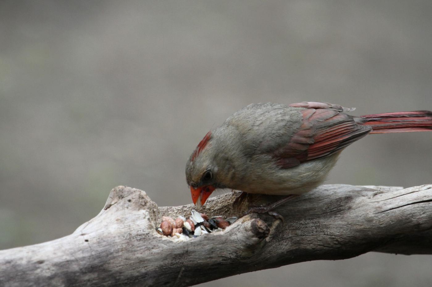 【田螺摄影】有吃的主教鸟还会挑肥拣瘦_图1-4