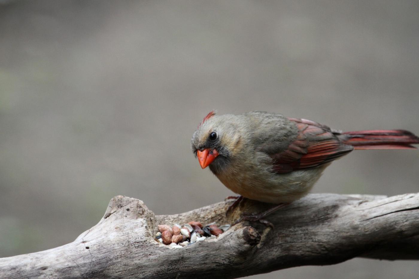 【田螺摄影】有吃的主教鸟还会挑肥拣瘦_图1-6