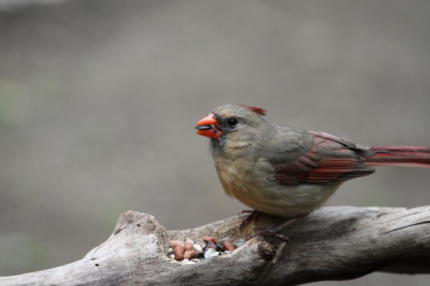 【田螺摄影】有吃的主教鸟还会挑肥拣瘦_图1-5