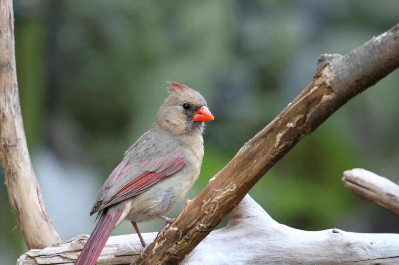 【田螺摄影】有吃的主教鸟还会挑肥拣瘦_图1-7