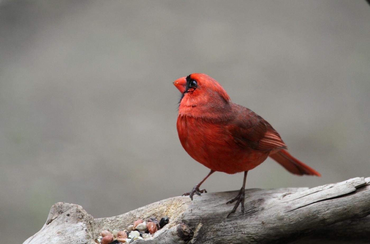 【田螺摄影】有吃的主教鸟还会挑肥拣瘦_图1-8