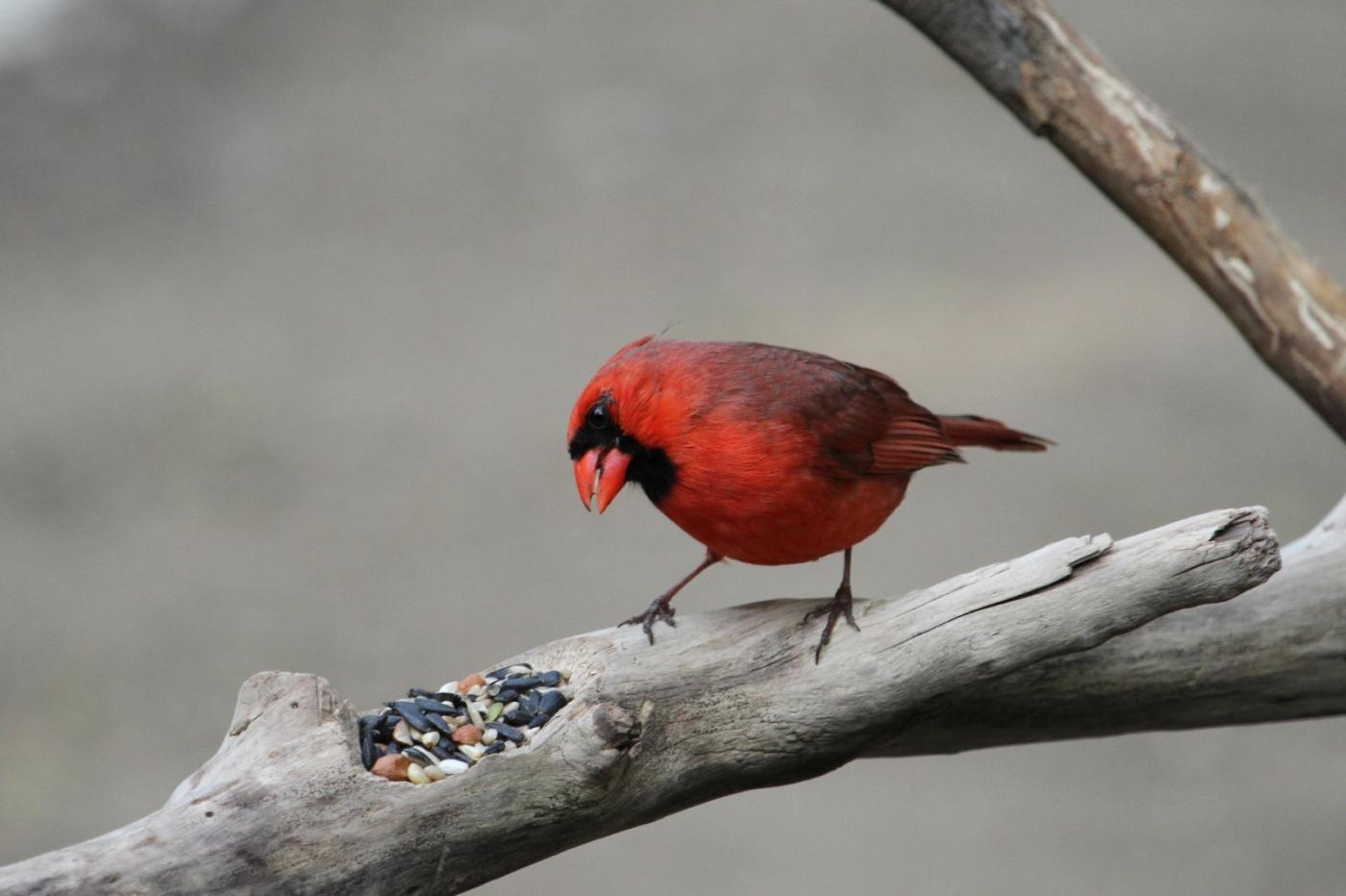 【田螺摄影】有吃的主教鸟还会挑肥拣瘦_图1-9