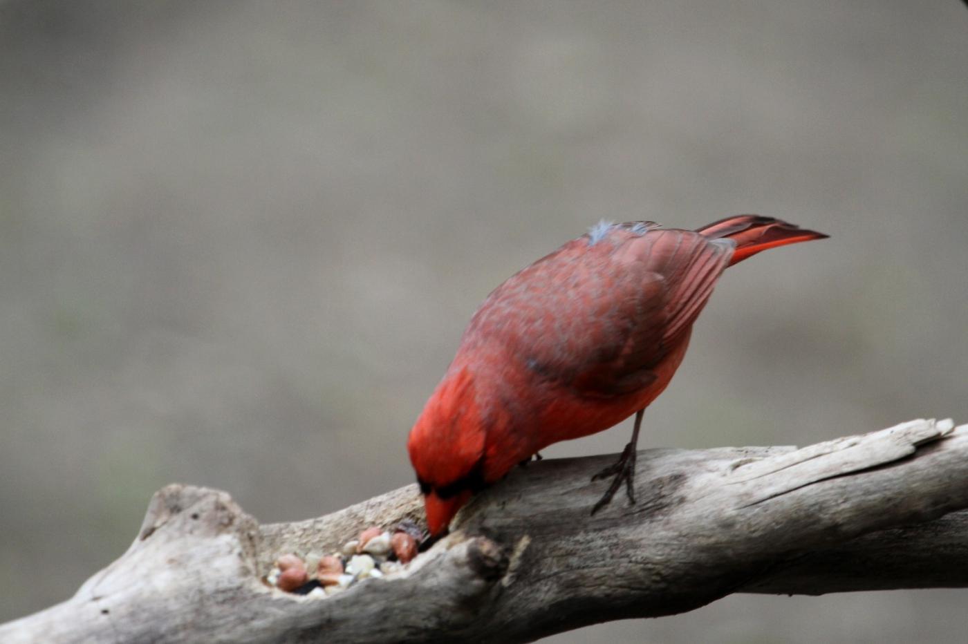 【田螺摄影】有吃的主教鸟还会挑肥拣瘦_图1-10