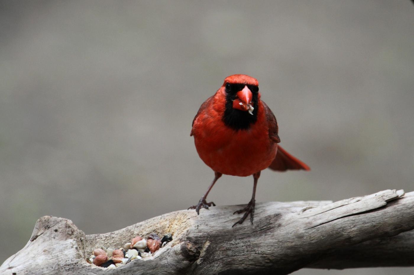 【田螺摄影】有吃的主教鸟还会挑肥拣瘦_图1-11