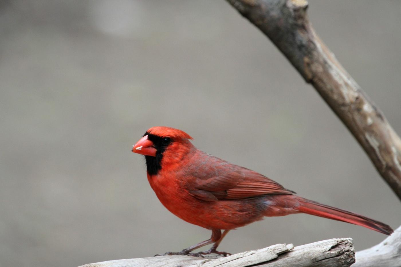 【田螺摄影】有吃的主教鸟还会挑肥拣瘦_图1-12