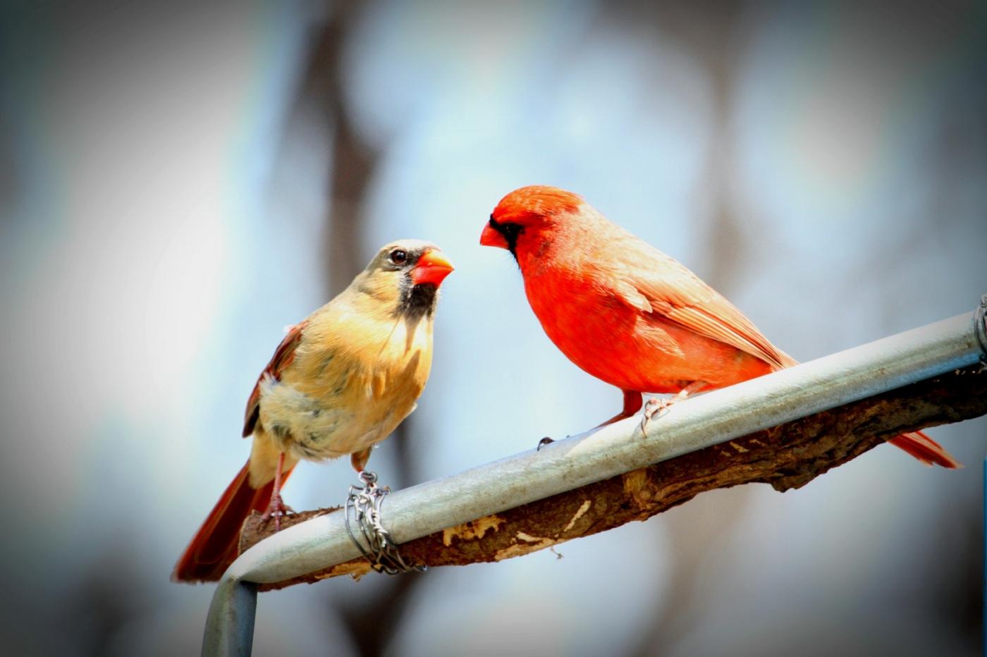 【田螺摄影】有吃的主教鸟还会挑肥拣瘦_图1-15