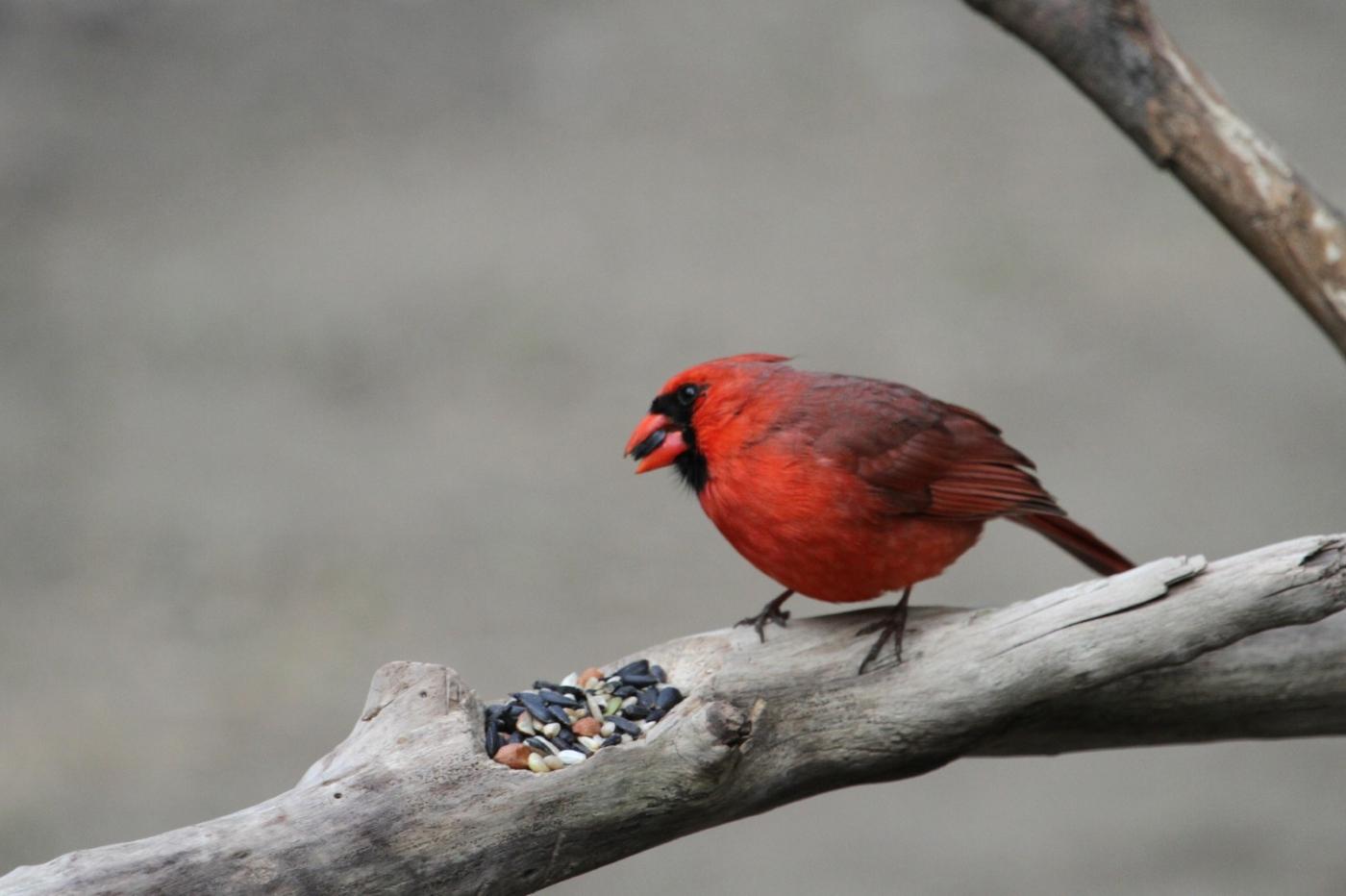 【田螺摄影】有吃的主教鸟还会挑肥拣瘦_图1-13