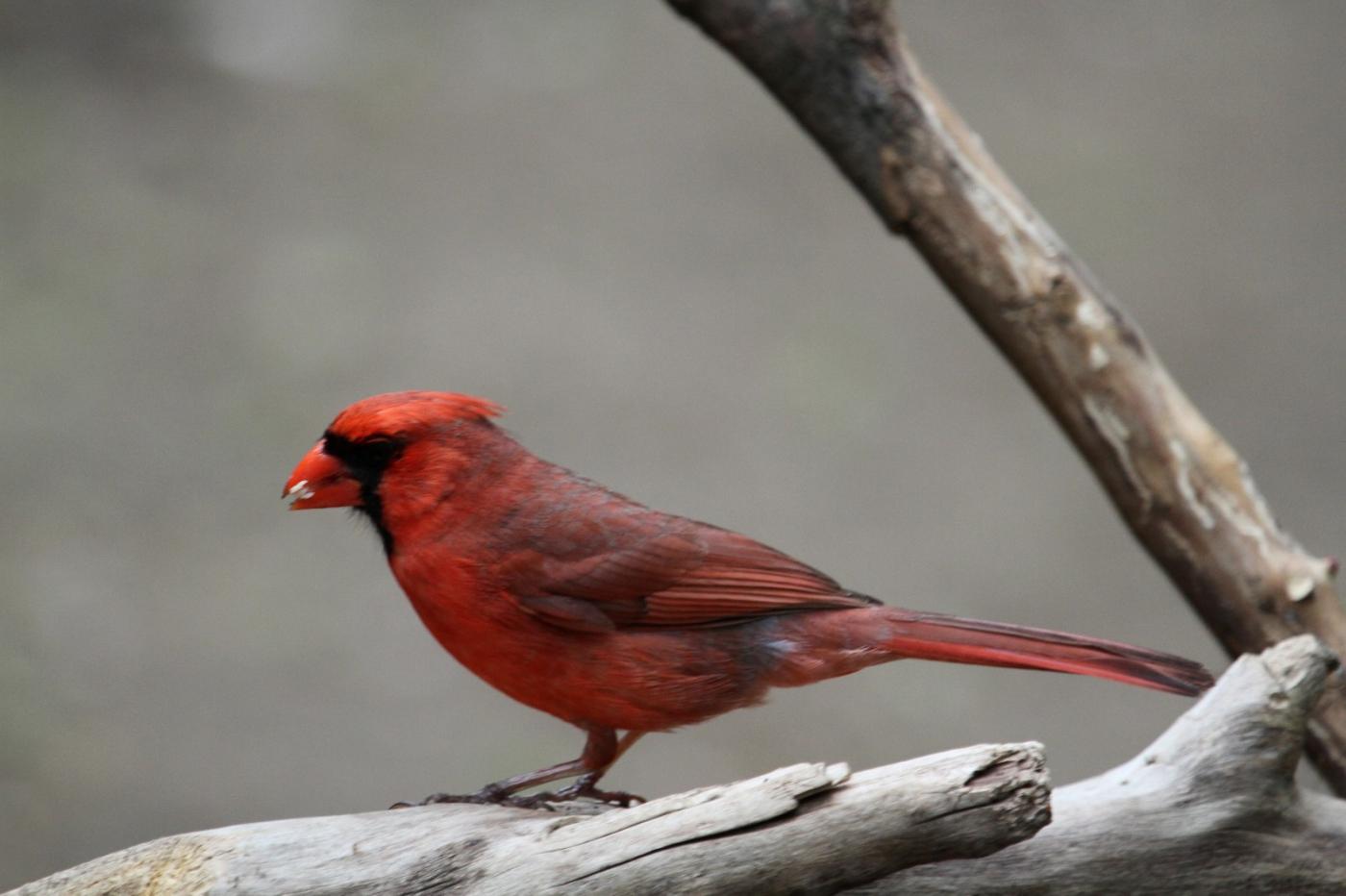 【田螺摄影】有吃的主教鸟还会挑肥拣瘦_图1-14