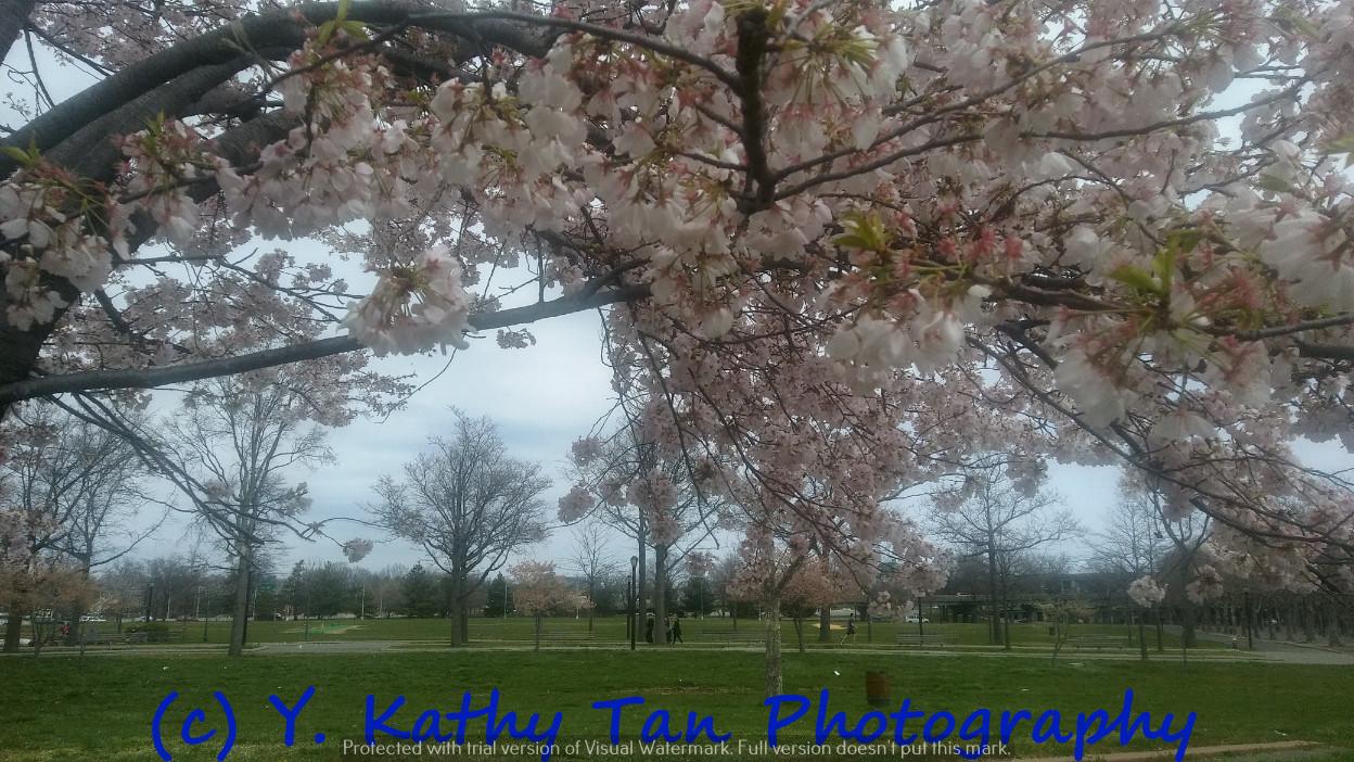 Fresh Meadows 可乐娜公园_图1-11
