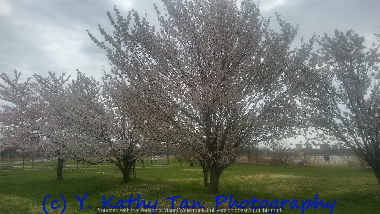 Fresh Meadows 可乐娜公园_图1-12