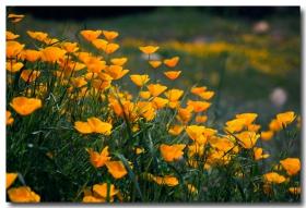 《酒一船摄影》:加州四月野花香