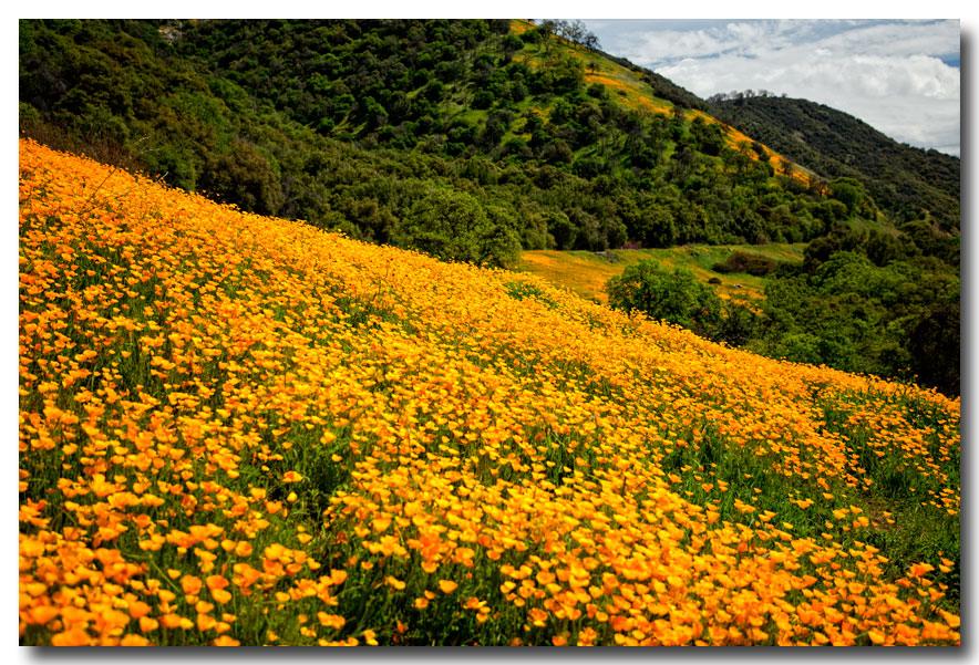《酒一船摄影》:加州四月野花香_图1-4